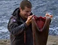 man vs wild seal wetsuite